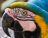 BIOTUR AMAZONAS: OBSERVAÇÃO DE AVES/ BIRD WATCHING