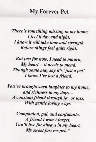 My forever pet ? Missing our pets we have lost & all my other pets a long the way growing up!