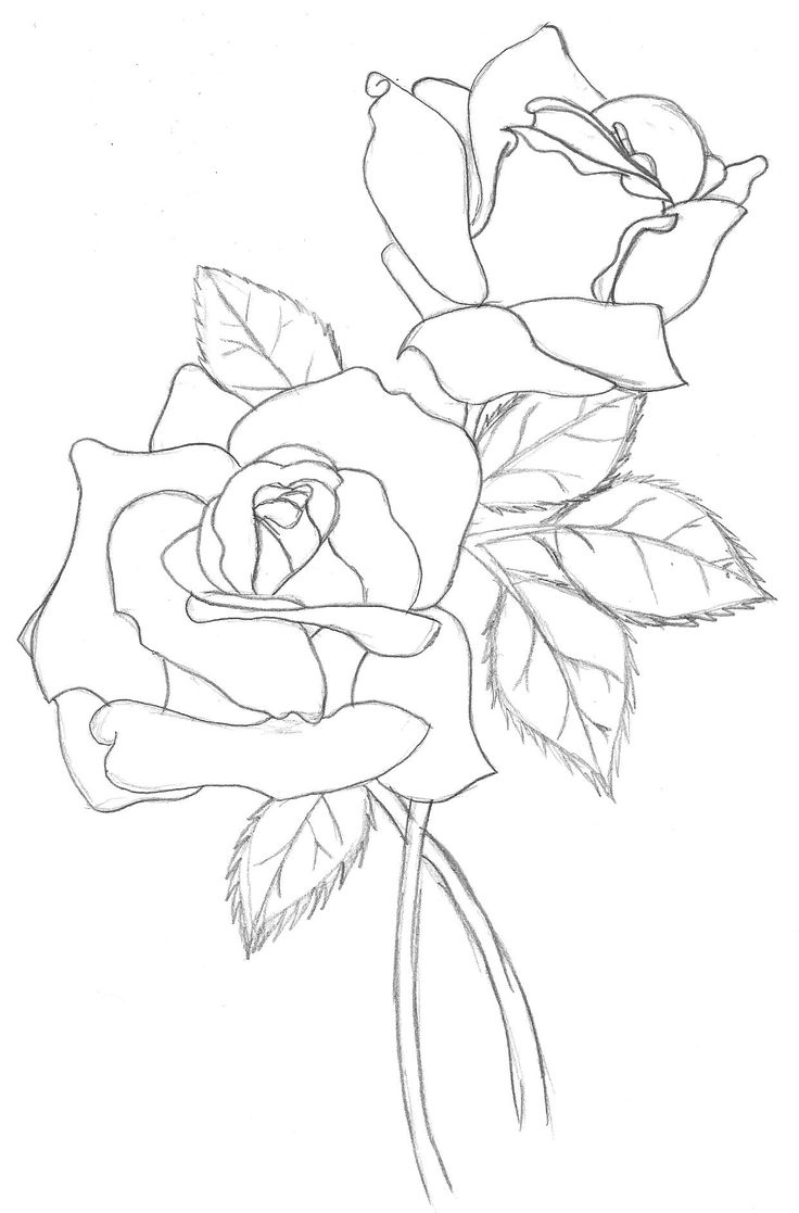 Line Drawing Rose Flower : Outline illustration templates stencils silhouettes