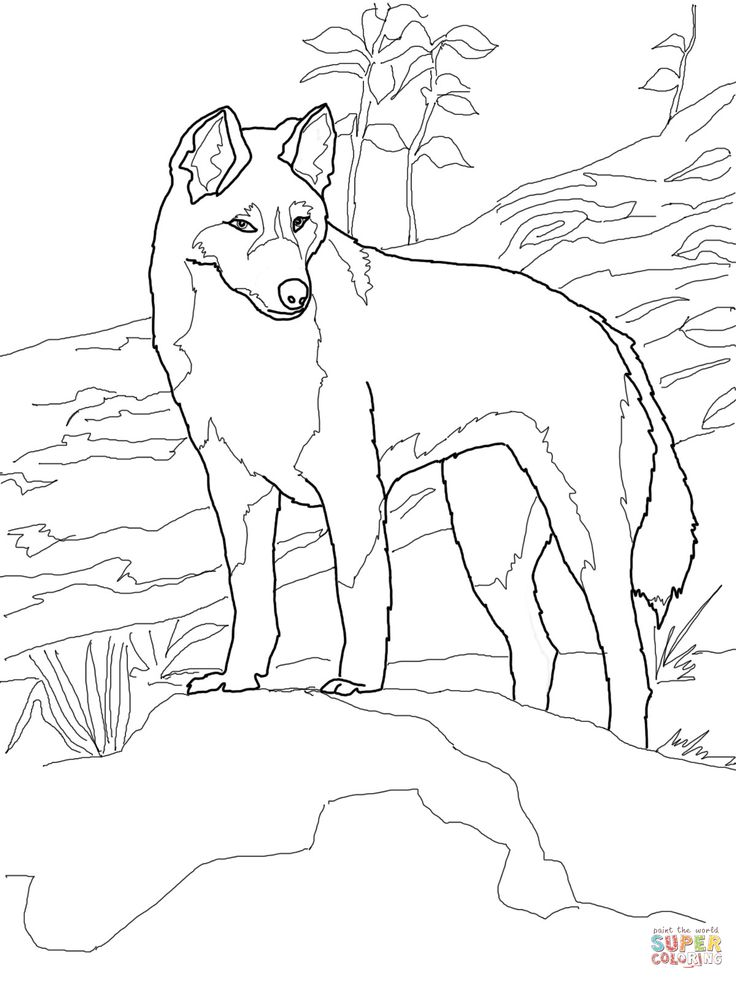 Dingo From Australia Coloring Page Category Select 27260 Printable Crafts Of Cartoons Nature Animals Bible And Many More