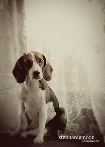 Fine Art Dog Photography black and white dog by stephaniemoon, $32.00