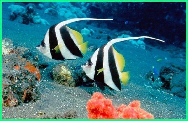 Jenis Ikan Hias Air Laut Gambar Ikan Laut 100 Jenis Ikan Hias Akuarium Yang Bertahan Hidup Lama Ikan