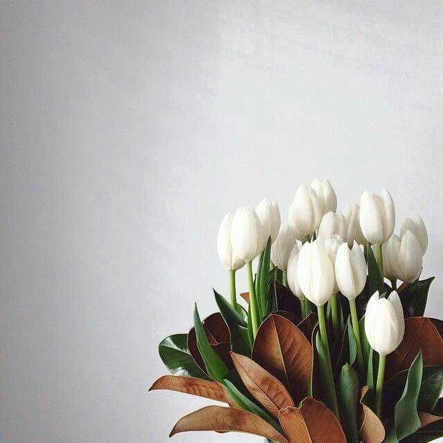 تولييب Tulips Arrangement White Tulips Flowers