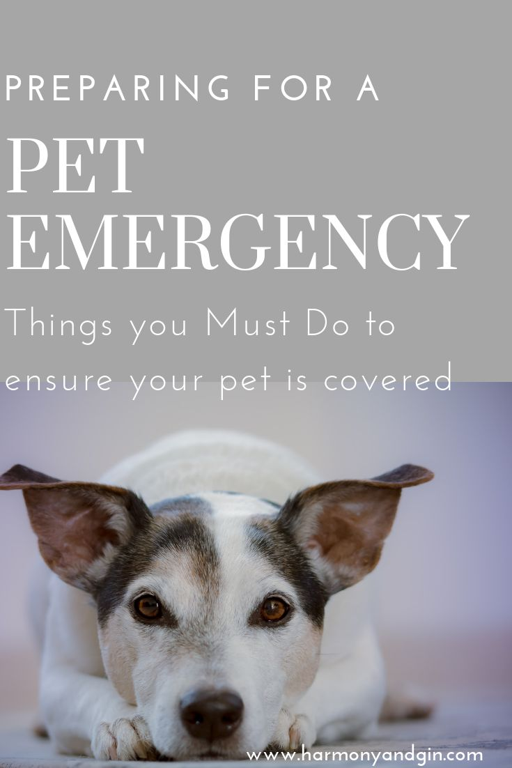 List of things you must do to prepare for a pet emergency