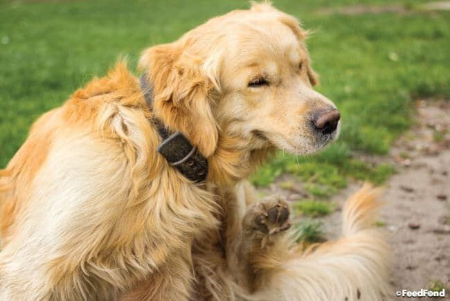 5 Best Dog Foods For Allergies In 2020 Medication For Dogs