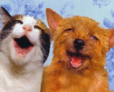 Smiling cat and dog :)