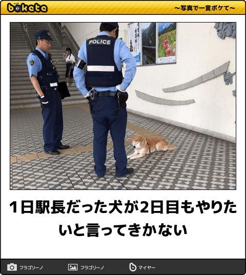 【ボケ】1日駅長だった犬が2日目もやりたいと言ってきかない - ボケて(bokete)