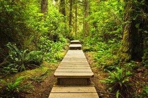 Triada motivationala - Viata in verde viu