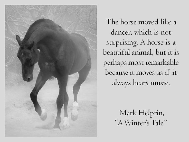 Winter Horse Pictures With Quotes. QuotesGram by @quotesgram