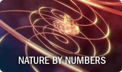 Nature by Numbers: gorgeous animation by Cristóbal Vila of Fibonacci numbers and the golden ratio in nature.: Fibonacci Number, Movie