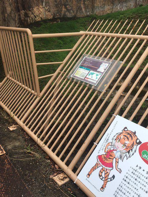 みさき公園【公式】@MISAKIKOEN  いよいよ明日、「けものフレンズ」イベントスタートです お祝いに駆けつけてくれた新フレンズのスマトラトラとホオジロカンムリヅルの姿をチラリ #みさき公園 #けものフレンズ #スマトラトラのフレンズ #ホオジロカンムリヅルのフレンズ (link: http://www.nankai.co.jp/misaki/eventAll/kemono_friends.html) nankai.co.jp/misaki/eventAl…