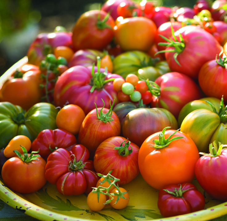 17 Best Images About Tomatoes On Pinterest Different 400 x 300