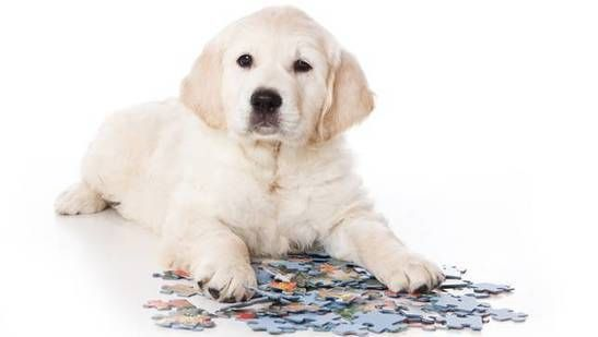 10 brain games to play with your dog