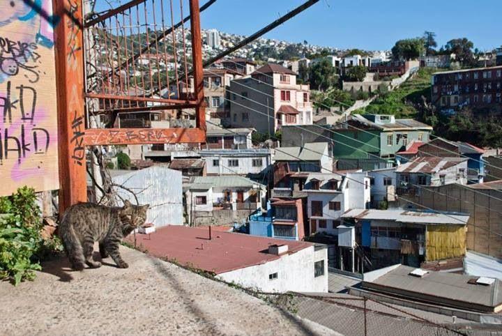 Gato, Valparaíso