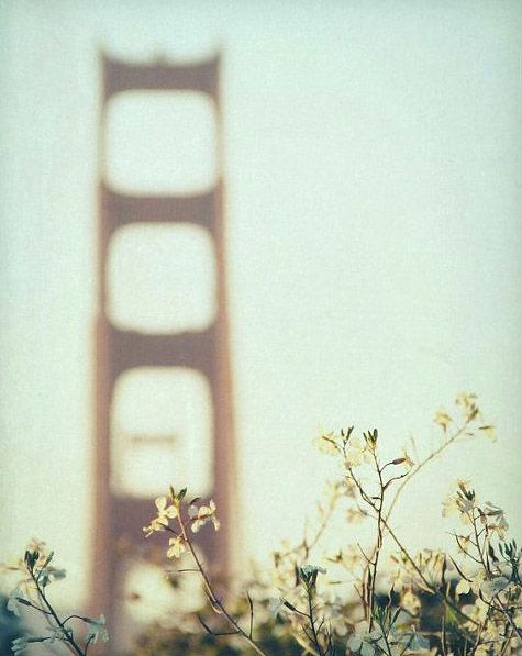 photography, san francisco photography - Golden Afternoon, 16x20 fine art metallic photograph