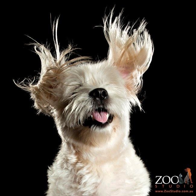 Uncontrollable dog ears :)