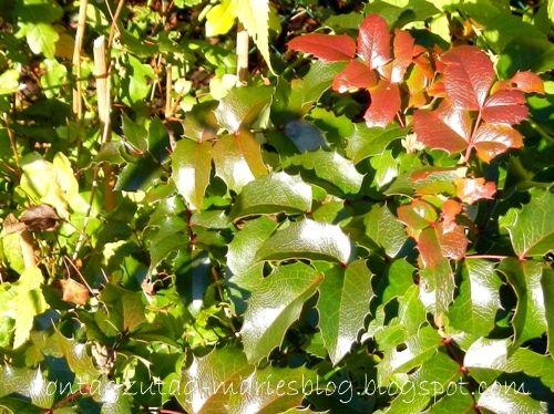 Von Tag zu Tag - Maries Blog: Die besten Pflanzen für den Herbstgarten