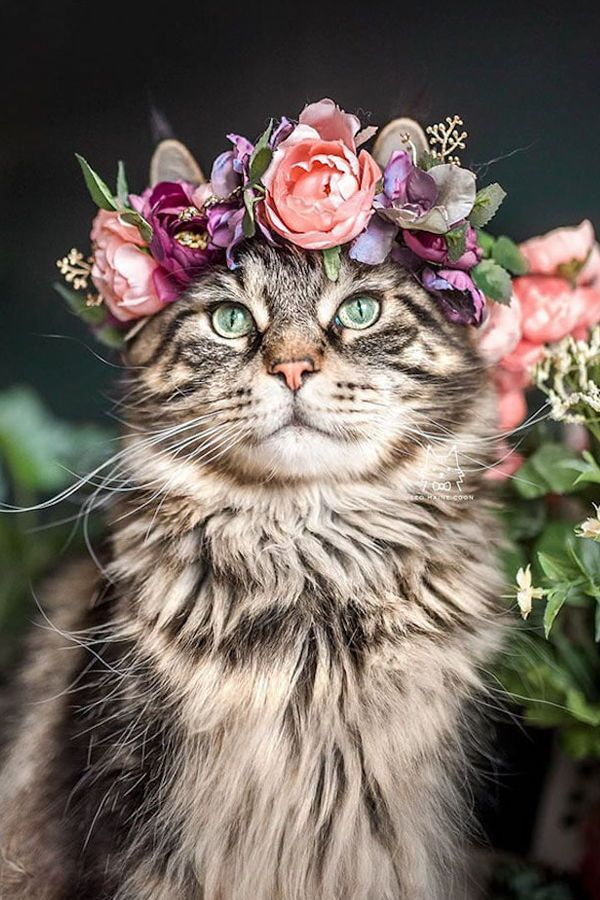 Interview Artist Designs Custom Floral Crowns For Your Beautiful Pets Beautiful Cats Kittens Kittens Cutest
