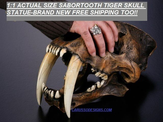 """PRODUCT: IN STOCK AND READY TO SHIP  HANDLING SHIPPING 6-9 DAYS  Handmade Resin Replica 1:1 Saber-toothed Tiger Skull Model Anatomy With Stand  Packaging box size: 14""""10""""17""""(352643cm)  About 3.5kg with package.  Figure Material: NEW Environment..."""