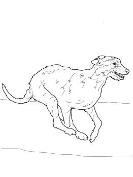 irish terrier coloring pages - photo#28