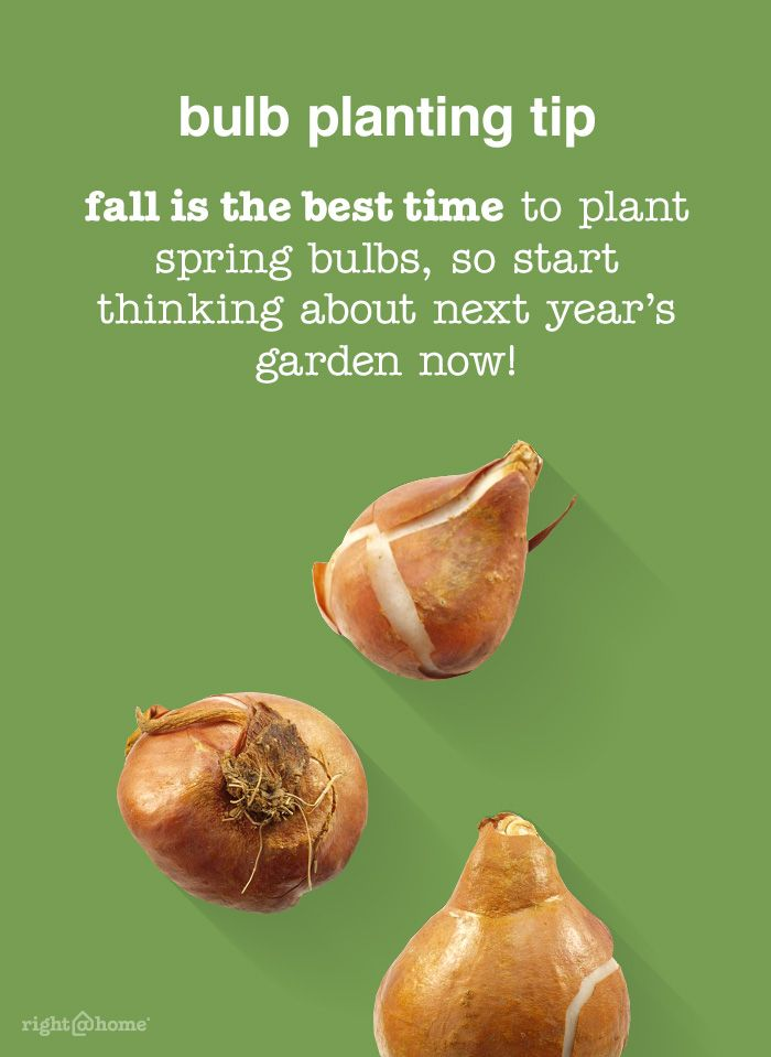 "Autumn is the time to visualize your spring garden and plant accordingly. Here are our outdoor ""to-dos"" that reap the fruits of fall, plan for spring and keep your autumn garden aglow."