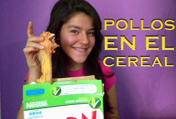 Pollos muertos en el cereal | LOS POLINESIOS BROMAS PLATICA POLINESIA - YouTube