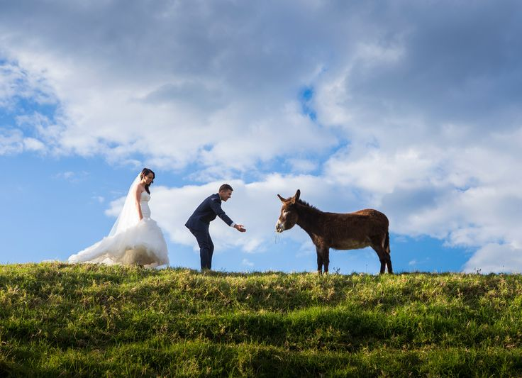 Random Donkey shot with Bride & Groom - Salt Studios| Toowoomba Wedding and Commercial Photography