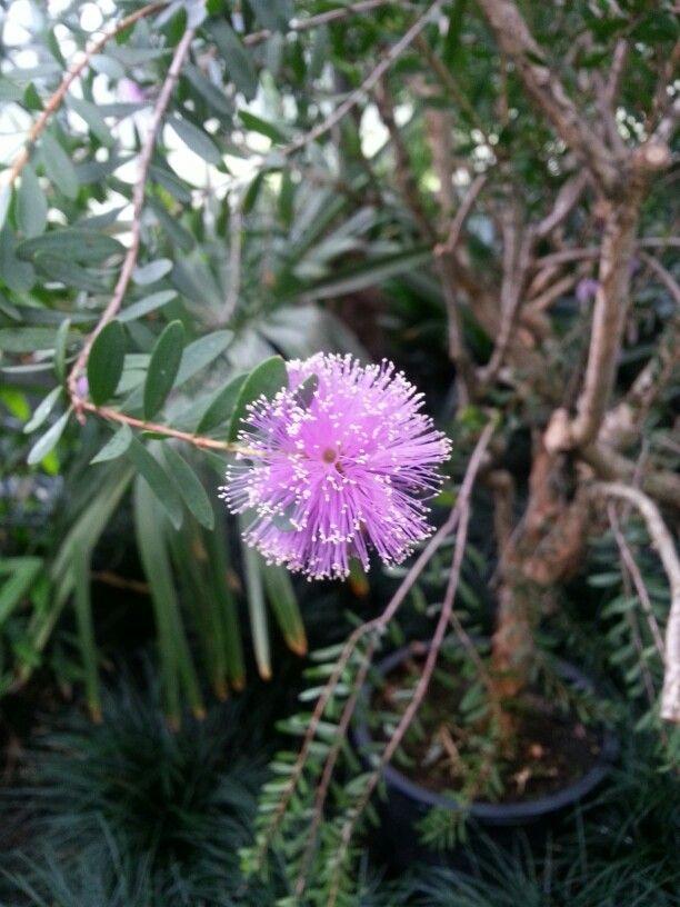 Außergewöhnliche Blüte