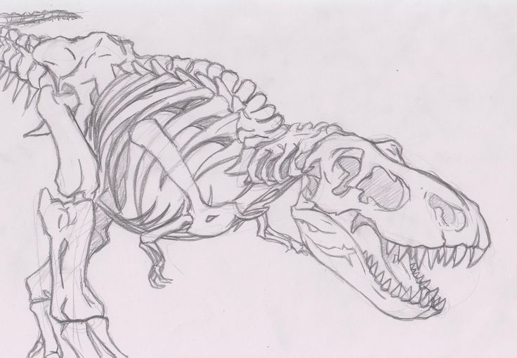 T rex skeleton drawing