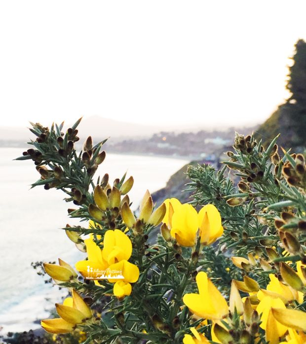 travel-dublino-vico-road-killiney-hill-flowers-following-your-passion