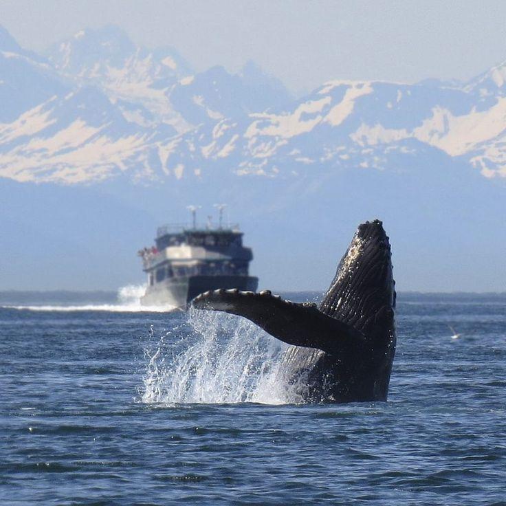 Terre d'Islanda: costa meridionale, orientale e safari delle balene da Reykjavik   Islanda