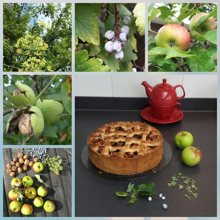WILDPLUK-APPELTAART Vul je zelfgemaakte appeltaart eens met zelf geplukte appels, noten, bessen van de rhibes en verse zaden van venkel.