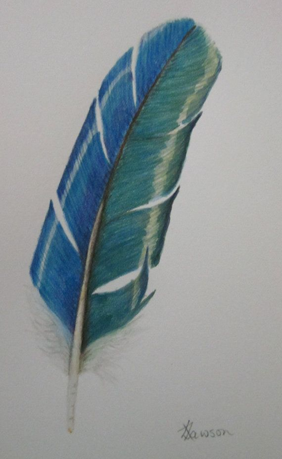 Teal feather 3  original drawing coloured pencil by anne4bags, $30.00