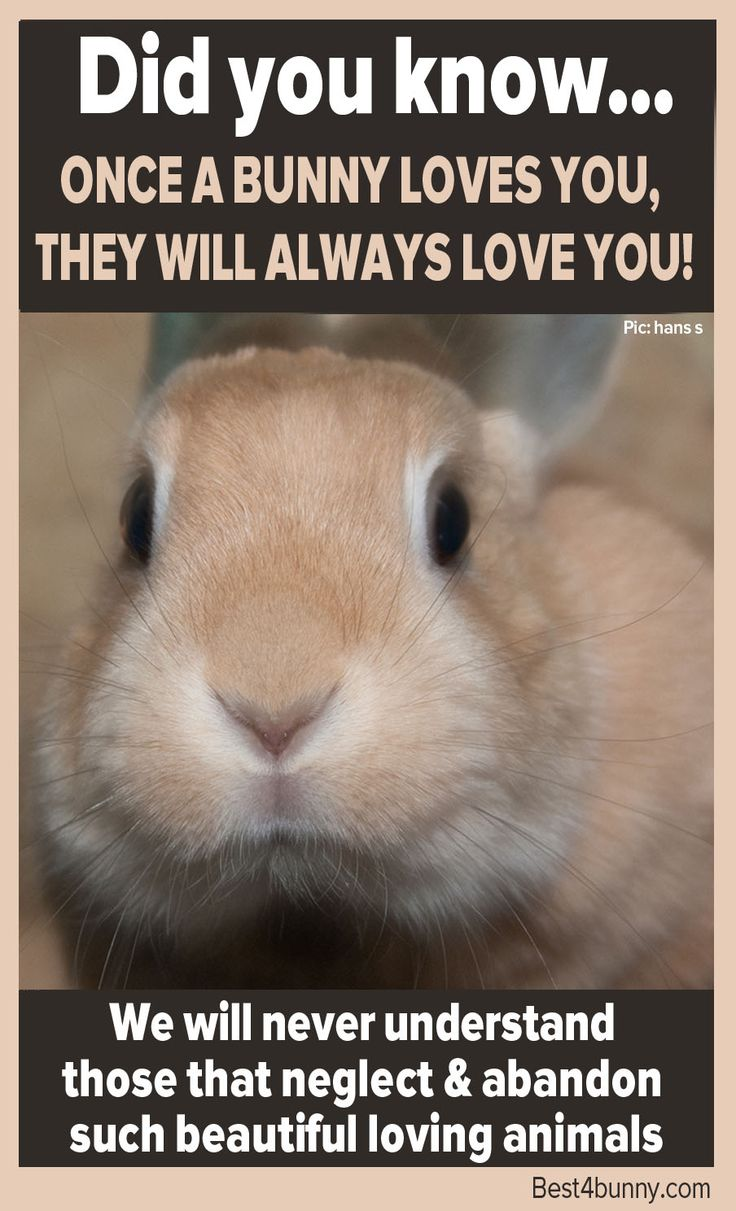 Did you know... Once a bunny loves you, they will always love you! http://best4bunny.com/