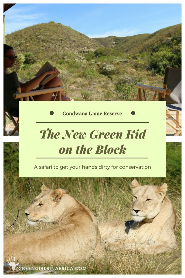 Tented Eco Camp is Gondwana Game Reserve near Mosselbay is the new, green kid on the block. The camp offers down-to-earth accommodation and hands-on, educational activities benefiting conservation.South Africa