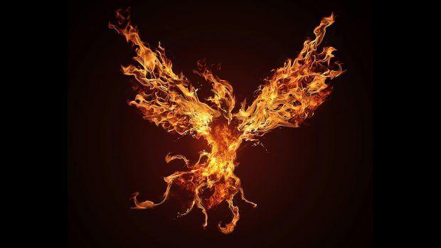 Phoenix Bird Wallpaper Free Download