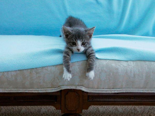 Cat urine smells, Cat urine and Urine smells on Pinterest