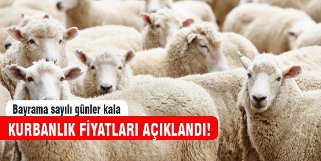 Kurbanlık fiyatları açıklandı! http://www.haberinadresi.com/ekonomi
