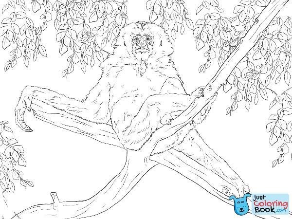 Gibbon Sits On Tree Coloring Page Free Printable Coloring Pages