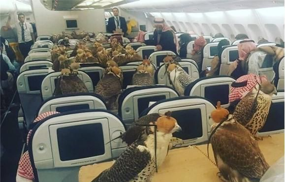 Aviação - Príncipe saudita compra 80 bilhetes de avião para... os seus falcões