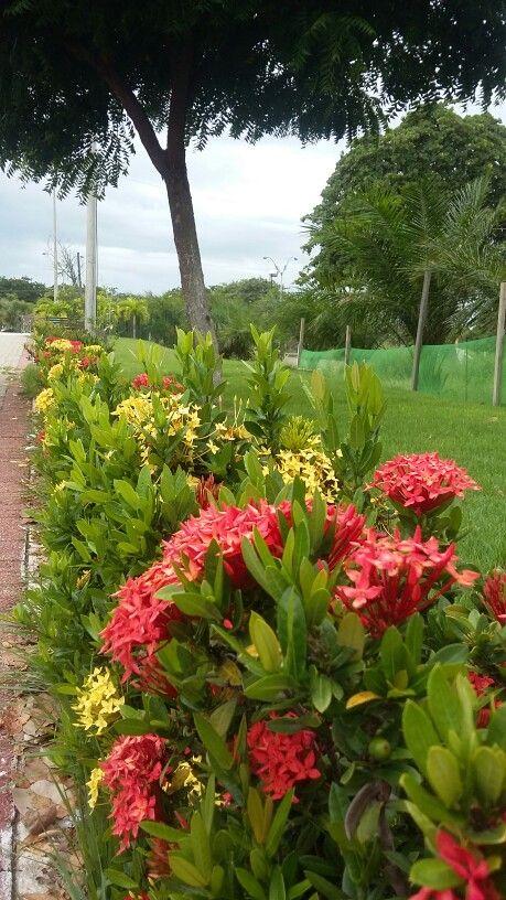 As flores na FVJ