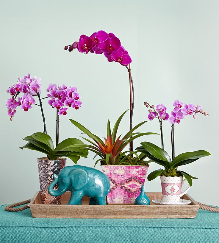 Ever wonder about the meaning of orchids? Check out these 5 surprising facts about orchids, from what they symbolize to what they can produce.