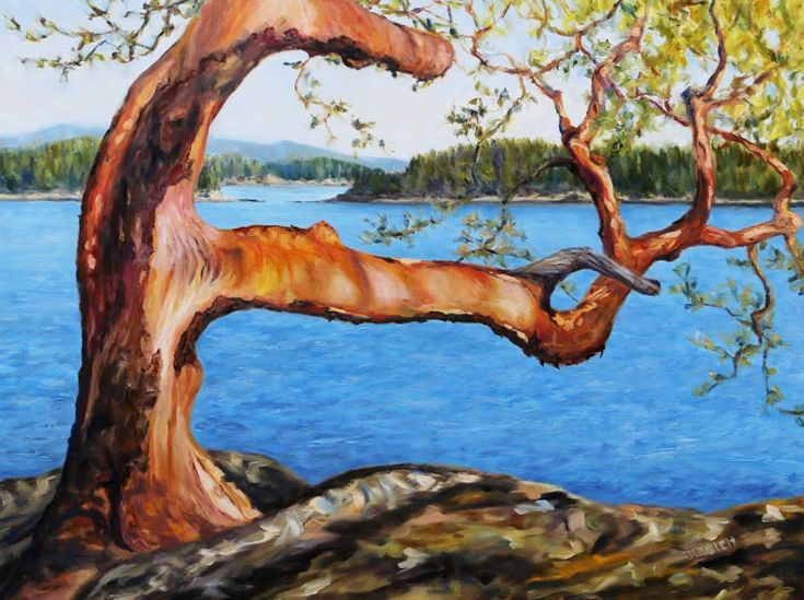 Arbutus Tree Reaching - large 36 X 48 inch oil painting by Canadian landscape painter Terrill Welch