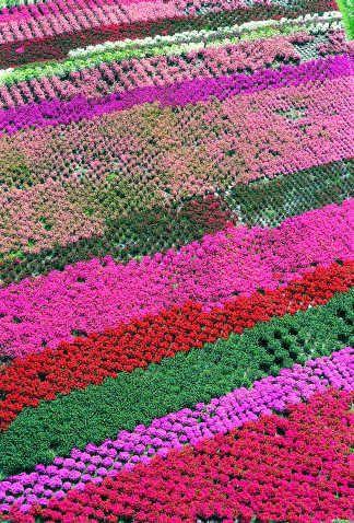 Azalea Field, Verbania, Cusio Ossola, Piemonte, Italia #findyouritaly