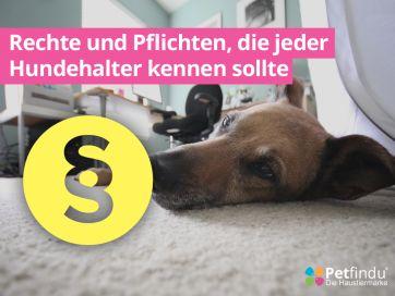 Hunderecht, Gesetze für Hunde, Hundegesetz, Leinenpflicht, Hund Restaurant, Hund im Wald