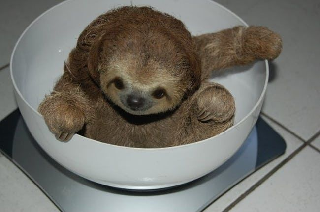 Snack is listed (or ranked) 3 on the list 47 Adorable Pictures of Sloths