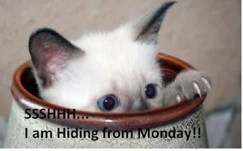 Image result for have a happy week ahead cat images
