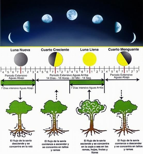 A lua e a sua influencia nas plantas