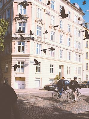 Soft photograph of a pink building in Copenhagen, with birds captured perfectly still. Photographer Elias Petersson. Available as poster and laminated picture at printler.com, the marketplace for photo art.