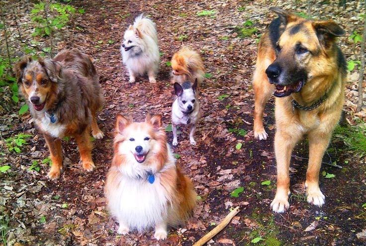 Ottawa Valley Dog Whisperer : Natural, Herbal Alternatives to Prednisone, Steroids, NSAIDs for Dogs, Cats